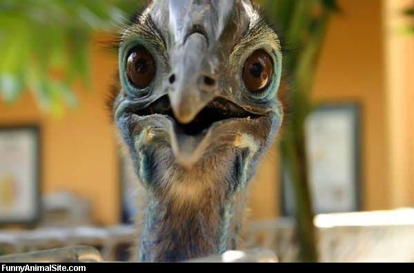 Funky_Bird_Face.jpg