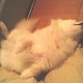 徐雪球先生睡死的樣子
