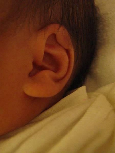 7/26弟弟的耳朵