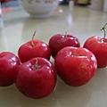 西印度櫻桃
