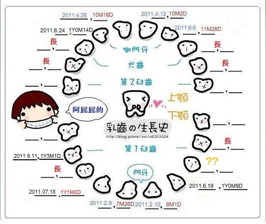 牙圖--6