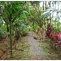 帛琉之旅-2010.07.07