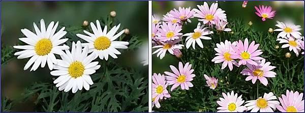 社區中庭小花