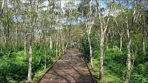 花蓮大農大富平地森林園區