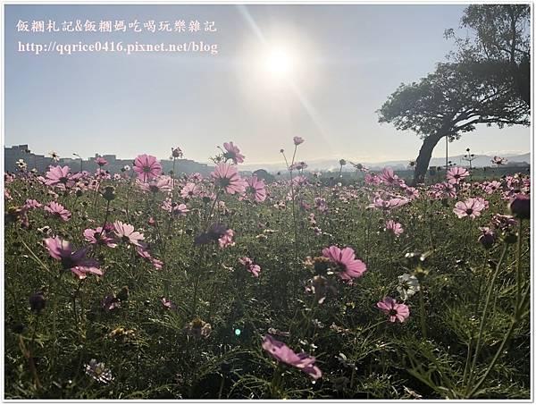 IMG_9282.jpg