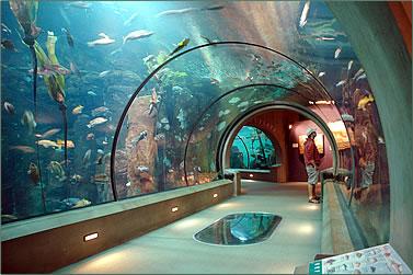 AquariumOfThePacific02.jpg