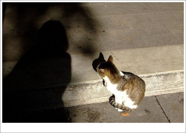 貓與我.jpg