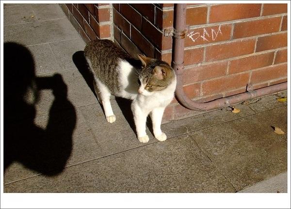 貓與我2.jpg