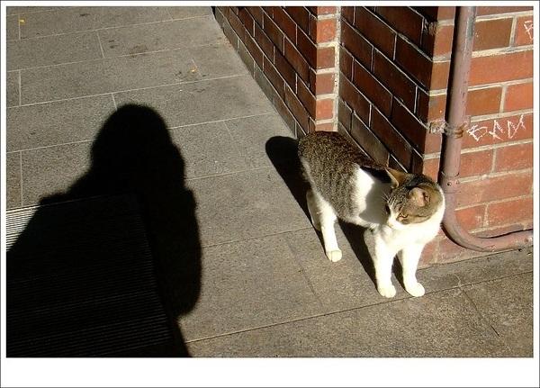 貓與我3.jpg