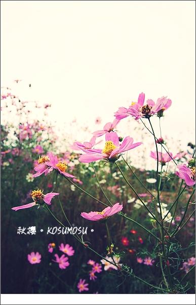 saku03.jpg