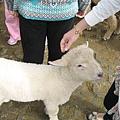 歐歐  可愛的小羊ㄋㄟ