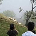 羊群下來了~~