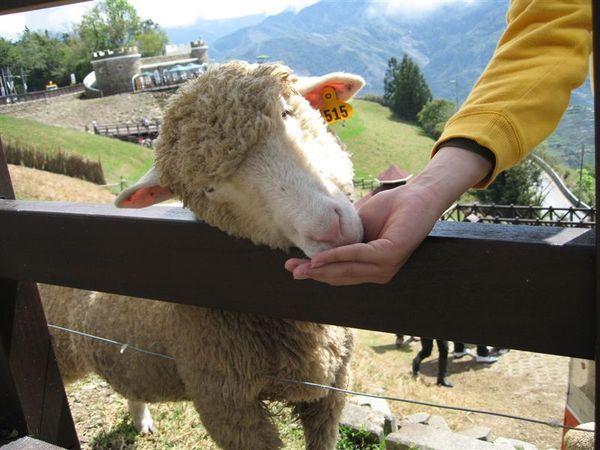 ya~~發現羊咩編號是我生日