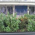 埔里市區中間島種滿可愛的花喔:p