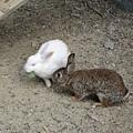 第一站呢就是這些可愛的小兔兔~