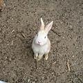 馬上就被小白兔注意到手上有食物嚕