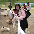 您看看....兔子是不是瞬間長高很多呢?