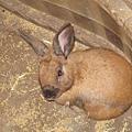 在屋子裡面的兔子