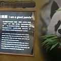 進到了裡面就是一些熊貓的基本介紹。
