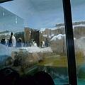 接著 一直念著要去企鵝館