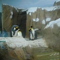 上次海生館的企鵝~~讓我念念不忘阿