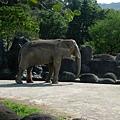 瘦瘦的大象
