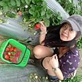 好像再去採草莓