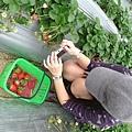 我也開始拍草莓了>///<