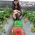 紅色那籃都是小旺採的~很巨大 長得比較奇怪的草莓:p
