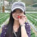 可愛的小草莓