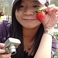 開始和可愛的草莓自拍~~小旺偷拍我>///<