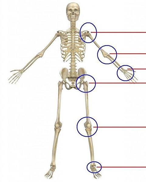 物理治療四肢關節