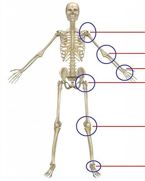 物理治療之四肢關節