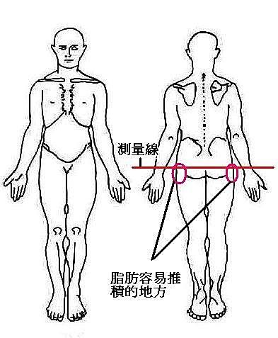 產後骨盆變 寬.產後骨盆變寬 髖骨突出