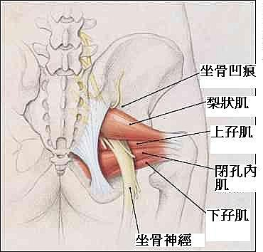 髖關節作彎曲伸直動作會出現聲響