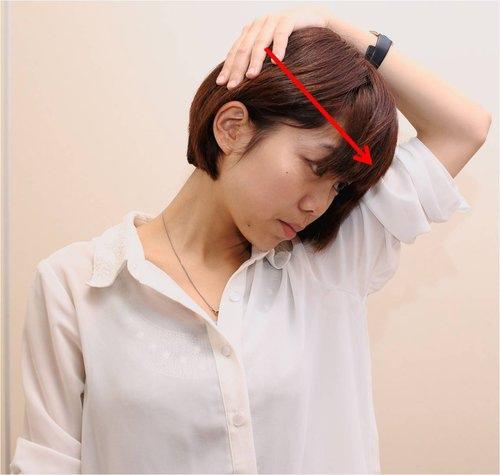 提肩胛肌(右側)