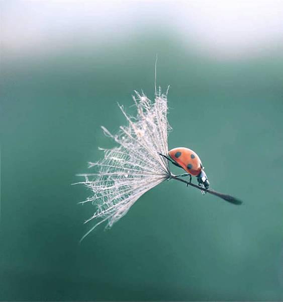 瓢蟲.jpg