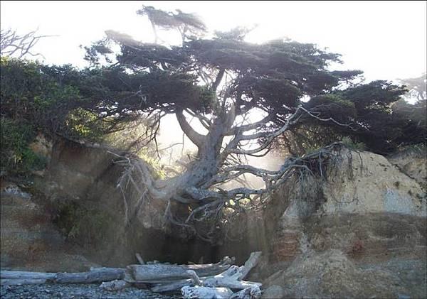 失控的樹.jpg