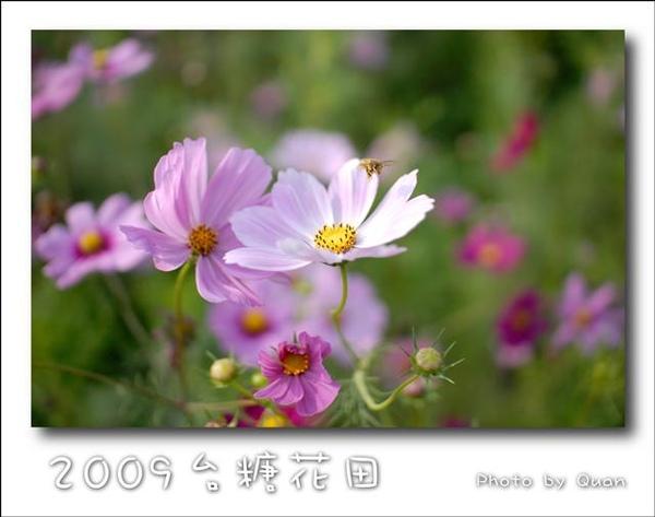 2009台糖花田0003.jpg