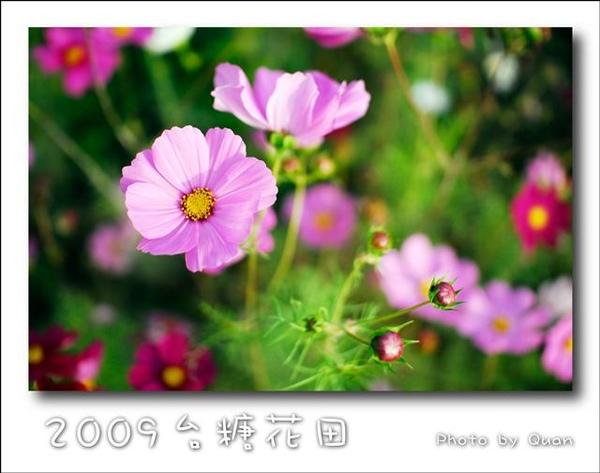2009台糖花田0007.jpg