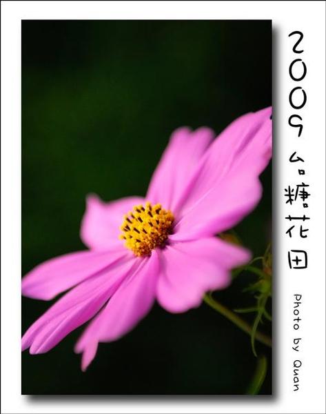 2009台糖花田0009.jpg