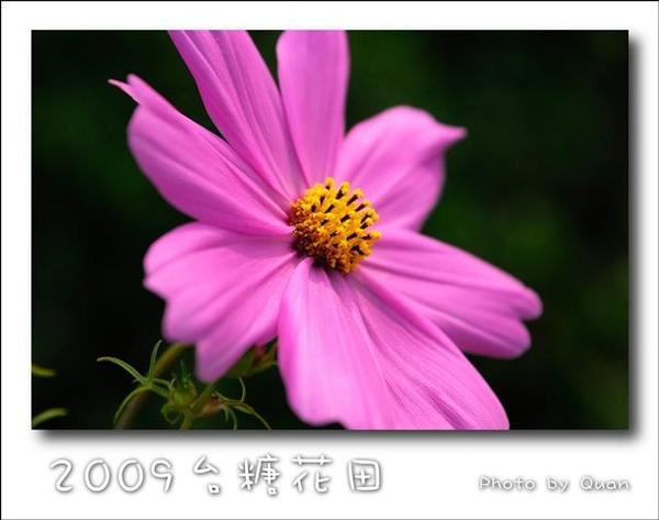 2009台糖花田0010.jpg