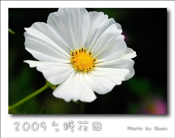 2009台糖花田0013.jpg