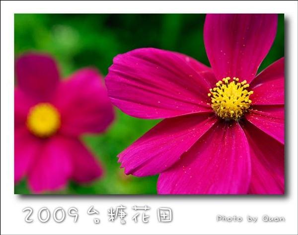 2009台糖花田0016.jpg