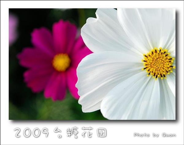 2009台糖花田0017.jpg