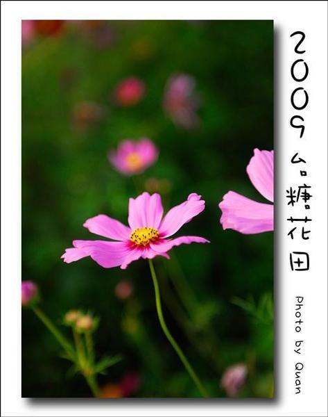 2009台糖花田0022.jpg