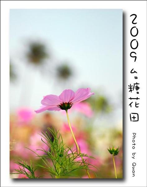 2009台糖花田0023.jpg