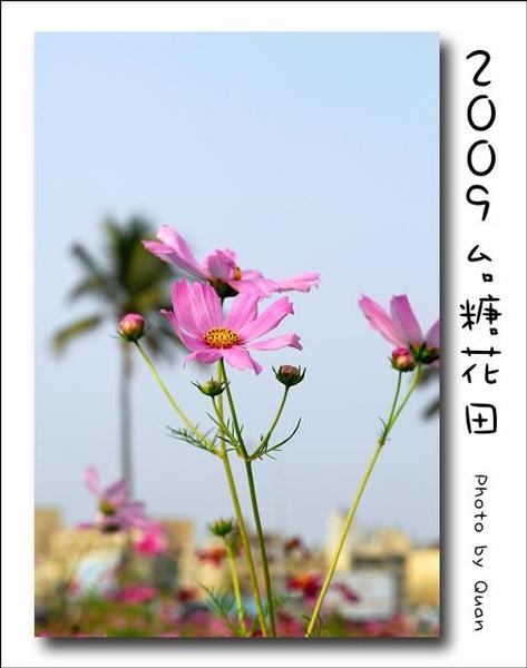 2009台糖花田0025.jpg