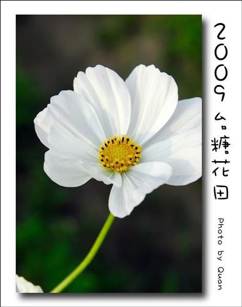2009台糖花田0028.jpg