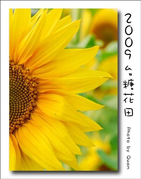 2009台糖花田0033.jpg